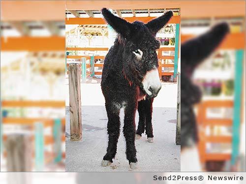 Brayfields Miniature Donkey Inc.
