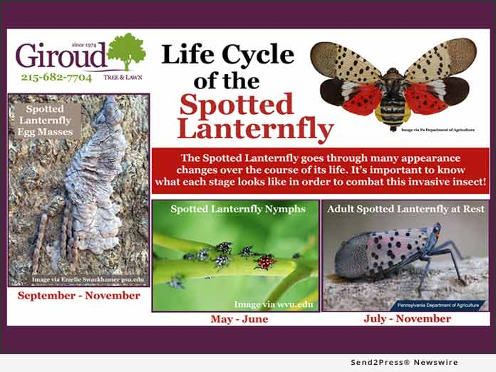 Life Cycle of the Spotted Lanternfly