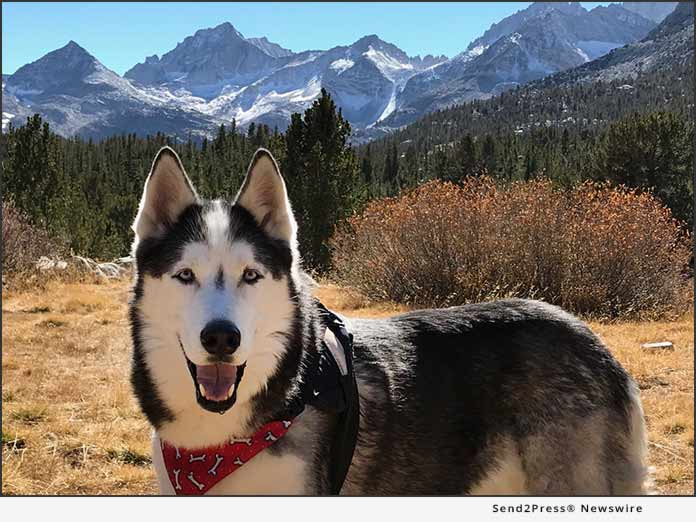 Legend in Mammoth - Ask Ariel Your Pet Nutritionist