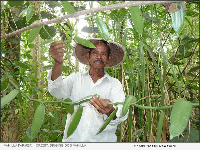 Vanilla Farmer in Indonesia - Credit: Singing Dog Vanilla