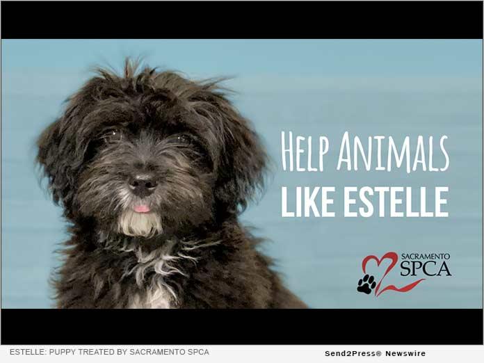 puppy recently treated by the Sacramento SPCA