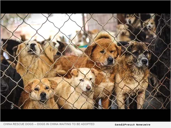 Dogs in China awaiting to be adopted by a forever family here in the United States