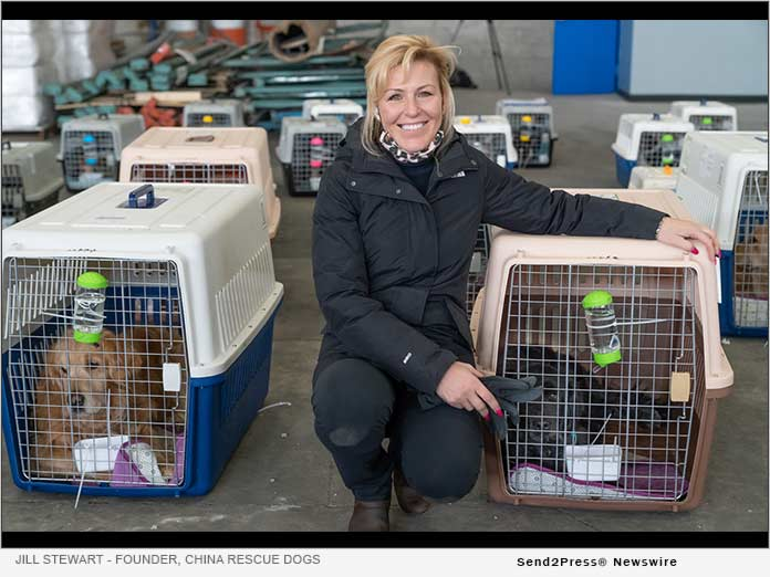 Jill Stewart President and Founder of China Rescue Dogs